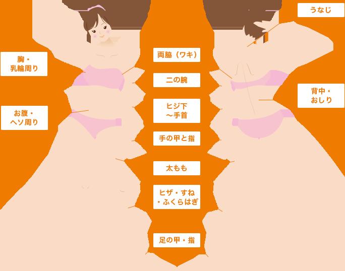 胸・乳輪周り、お腹・ヘソ周り、両脇(ワキ)、二の腕、ヒジ下〜手首、手の甲と指、太もも、ヒザ・すね・ふくらはぎ、足の甲・指、うなじ、背中・おしり